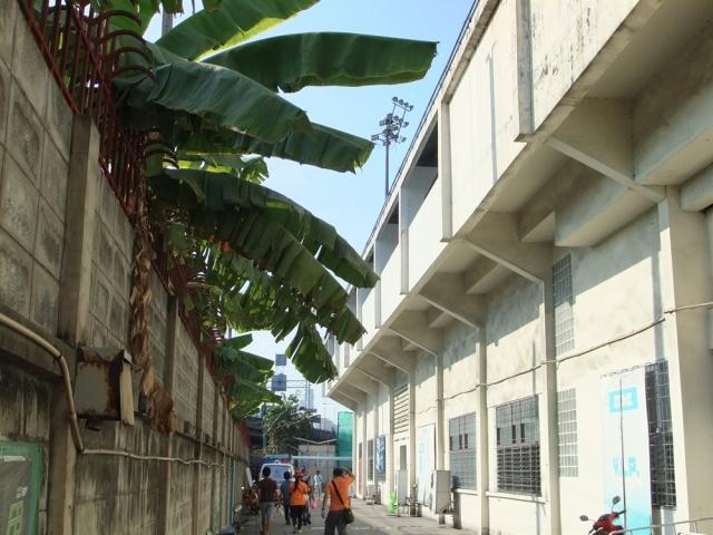 Thai Port 03