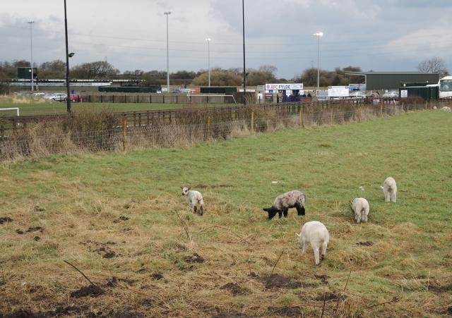 AFC Fylde v Bradford PA 03
